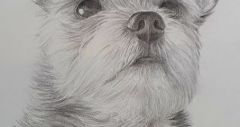 doggy drawing